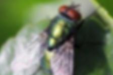 蚊子:确认过眼神,遇见了对的人